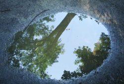 Auenwald im Spiegelbild. Foto: Ralf Julke