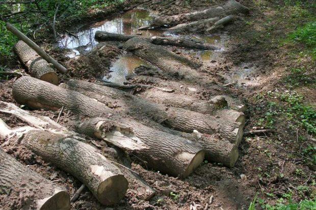 Wenn die schweren Baumerntemaschinen im Auenwald im Schlamm versinken. Archivfoto: NuKLA e.V.