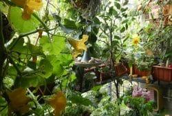Blühender Bio-Balkon. © Birgit Schattling