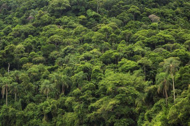 Die Regenwälder der Erde binden große Mengen an Kohlenstoff in ihrer Biomasse und sind damit eine entscheidende Kohlenstoffsenke. Foto: R-M-Nunes_Shutterstock