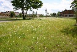 Der neu gestaltete Park auf dem Gelände des Eilenburger Bahnhofs 2004. Archivfoto: Ralf Julke