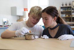 Mittelpunkt des Studiengangs Museologie steht die Auseinandersetzung mit den musealen Objekten wie beispielsweise dieser Zuckerdose. Wer wissen möchte, woraus sie besteht und aus welcher Zeit sie stammt, sollte das Schnupperwochenende besuchen. Quelle Lara Müller/HTWK Leipzig