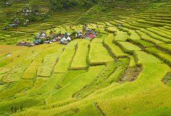 Artenreiche historische Kulturlandschaften gibt es nicht nur in Mitteleuropa, sondern beispielsweise auch in Asien, wie die hier abgebildeten Reisterrassen von Batad – eine Weltkulturerbe-Landschaft im Norden der Philippinen. Eine weitere nachhaltige Nutzung trägt zum Erhalt der Agrobiodiversität bei und beeinhaltet zugleich den Schutz artenreicher Bergwälder als wichtige Wasserspeicher für eine kontinuierliche Bewässerung. Bild: André Künzelmann / UFZ