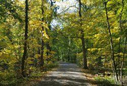 Auwald im Herbst. Foto: Marko Hofmann