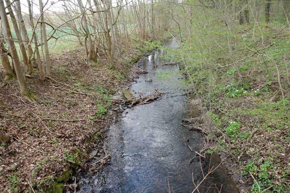Fließgewässer Zschampert. Foto: Maria Vitzthum