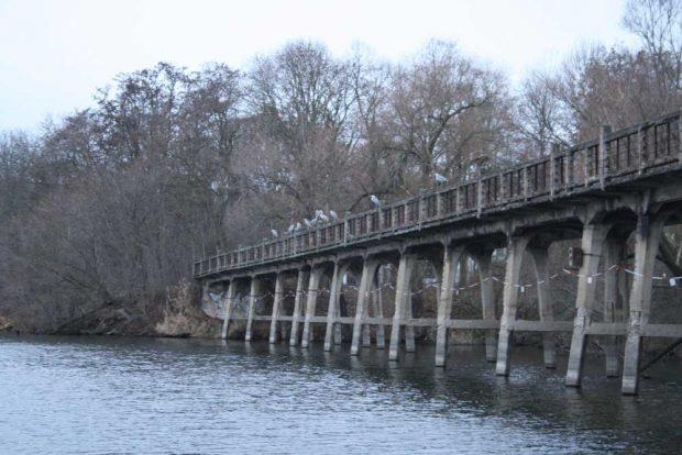 Die bei Reihern beliebte Brücke am Auensee. Foto: Ralf Julke