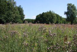 Waldwiese in der Dübener Heide. Foto: Naturpark - Verein Dübener Heide e.V.