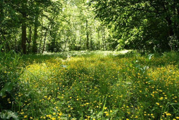 Feuchtwiese im südlichen Auenwald. Foto: Ralf Julke