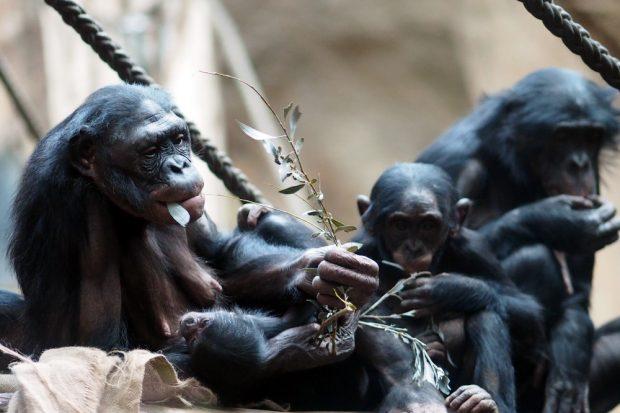 Lexi mit ihrem neuen Jungtier © Zoo Leipzig