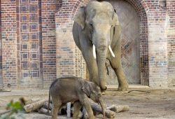 Voi Nam und sein Sohn © Zoo Leipzig