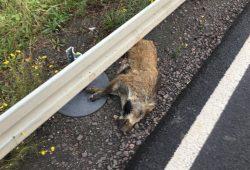 Verunfalltes Wildschwein am Straßenrand. Foto: Landkreis Leipzig