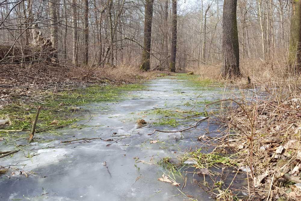 Frost im Leipziger Auenwald. Foto: Marko Hofmann