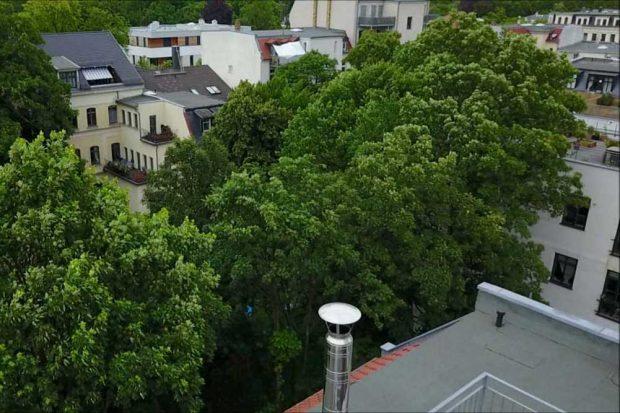 So grün war der Innenhof, bevor die Bäume gefällt wurden. Foto: Frank Wernstedt