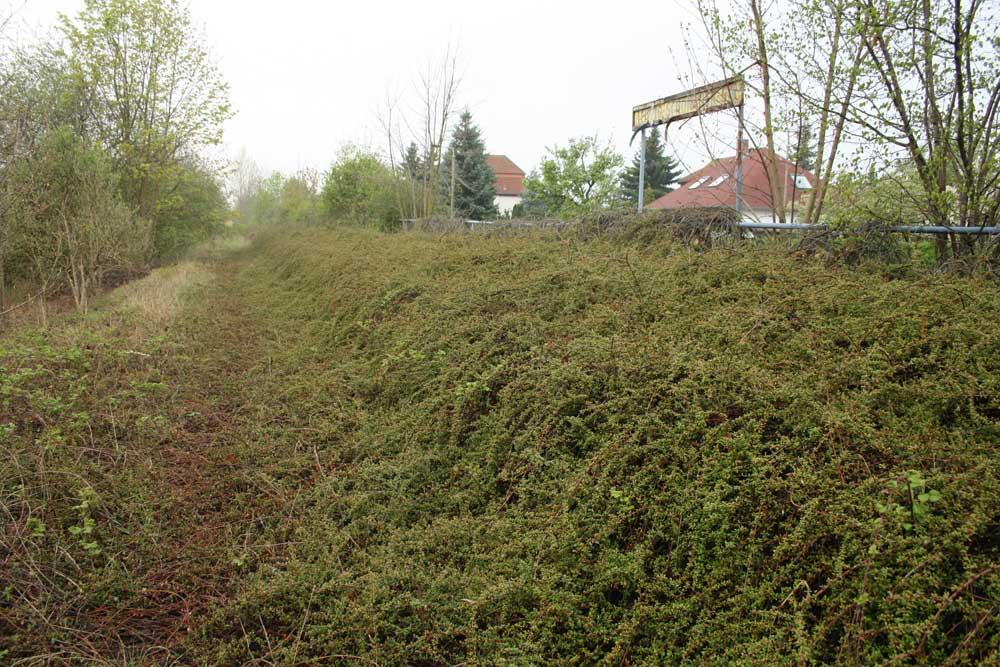 Zugewuchert: Die aufgegebene Bahnstrecke am Lausner Weg in Grünau. Foto: Ralf Julke