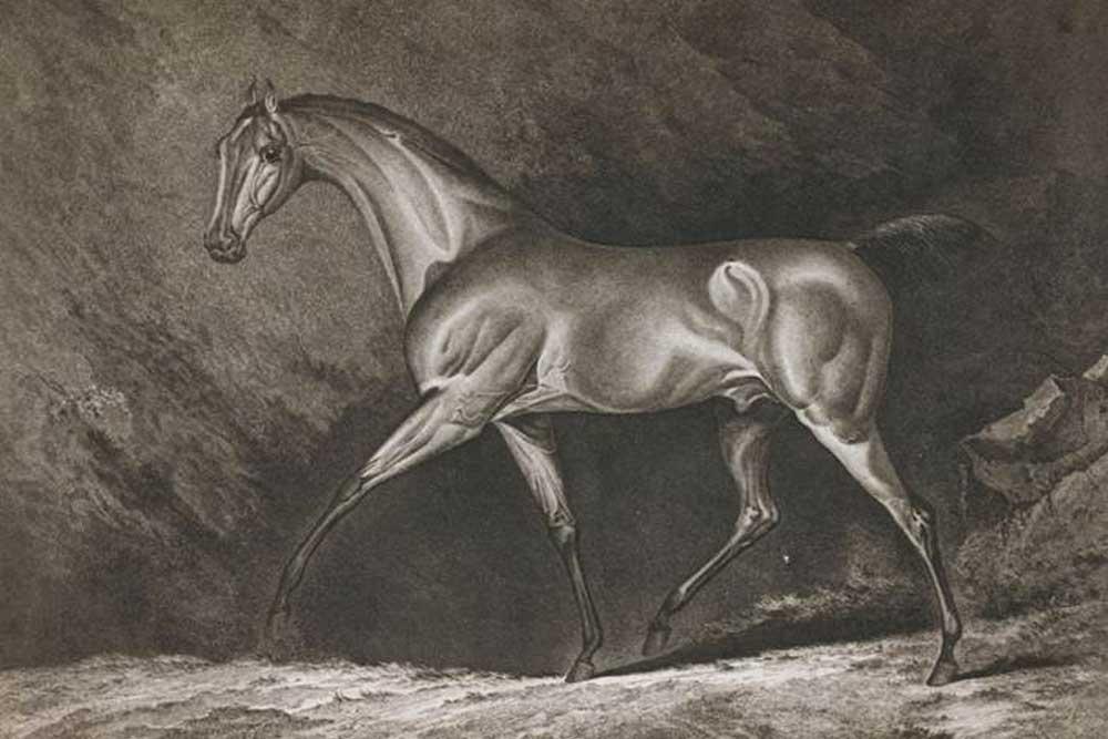 Historische Pferdedarstellung. Foto: Universität Leipzig