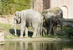 Kiran mit Mutter Rani Tante Don Chung und Vater Voi Nam. © Zoo Leipzig