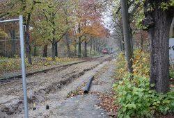 Alter Baumbestand im Gelände der Parkstadt. Foto: L-IZ