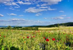 Eine strukturreiche Landschaft erfreut das Auge, fördert die biologische Vielfalt und kommt auch den Landwirten zugute. Foto: Sebastian Lakner