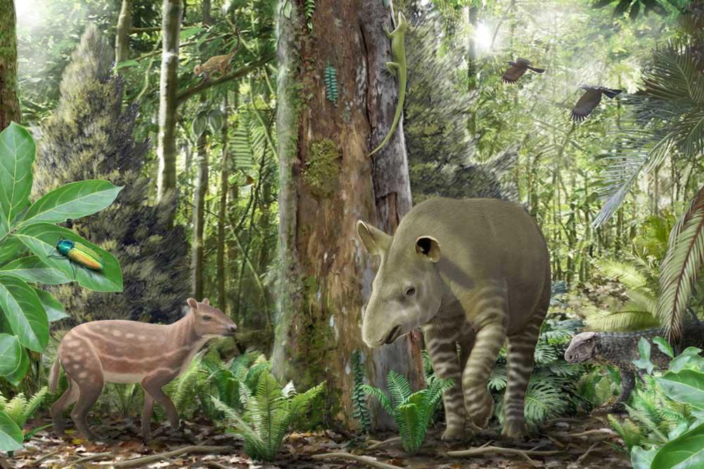 Künstlerische Darstellung des Ökosystems im Geiseltal vor 47 Millionen Jahren mit dem kleinwüchsigen Urpferd Propalaeotherium links im Bild, dem frühen Tapir Lophiodon in der Mitte und einem jungen landlebenden Krokodil Bergisuchus im Hintergrund. Foto: Márton Szabó