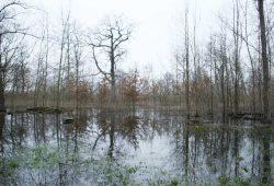Paußnitzflutung im Leipziger Ratsholz. Foto: Ralf Julke