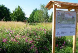 Es grünt und blüht: Das Biotop Plaußig im Norden Leipzigs steuert der NABU Leipzig für den Biotopverbund bei. Weitere Flächen der anderen Akteure werden mit der Schmetterlingswiese verbunden. Fotos: Steffen Wagner