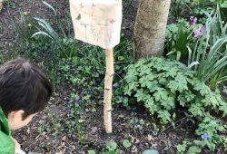 Eine Baumscheibe wird bepflanzt © Ökolöwe