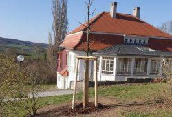 Frisch gepflanzte Esskastanie für Max Klinger in Großjena. Foto: Firma Kittel