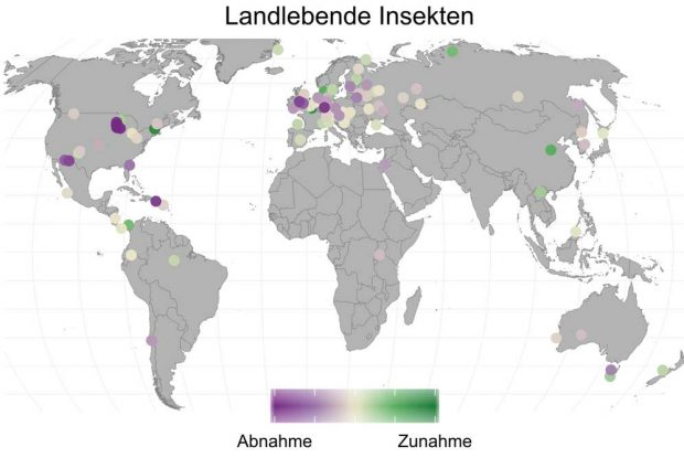 Die verschiedenen Studien zu landlebenden Insekten. Bild: Roel van Klink. Angepasst von van Klink et al. (2020), Science. Mit Genehmigung von AAAS