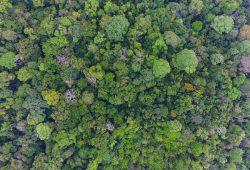 Fast 300 Baumarten wachsen in dem 50 Hektar großen und ursprünglichen Wald auf Barro Colorado Island in Panama. Foto: Christian Ziegler