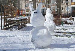 Schneehase - eingefangen 2018. Foto: Ralf Julke