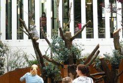 Direkt am Restaurant Palmensaal - das neue Koala-Gehege © Zoo Leipzig