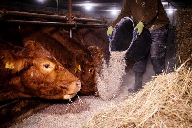 Jeden Morgen früh füttern, aber jetzt selbst auf Diät: Wer in der Landwirtschaft arbeitet, muss künftig um die Zusatzrente fürchten. Davor warnt die Agrar-Gewerkschaft IG BAU. Foto: IG BAU