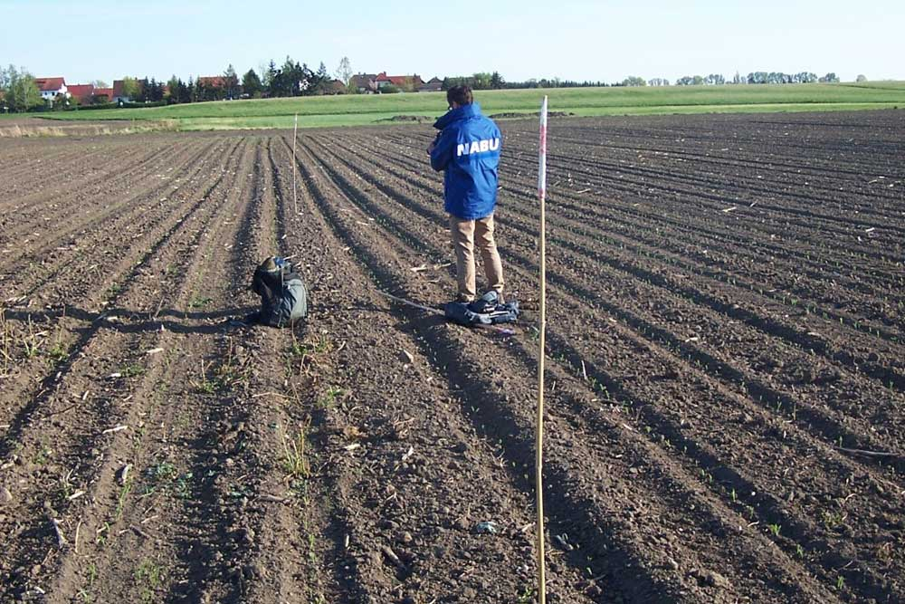 Der NABU Leipzig hat den Standort des Kiebitznestes markiert, damit der Landwirt das Areal verschonen kann. Fotos NABU Leipzig
