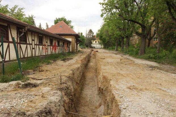 Noch stehen die alten Bäume: Bauarbeiten in der Parkstadt Dösen. Foto: L-IZ