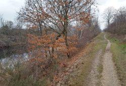 Rudimentärer Weg am Rand des Elster-Saale-Kanals. Foto: Marko Hofmann