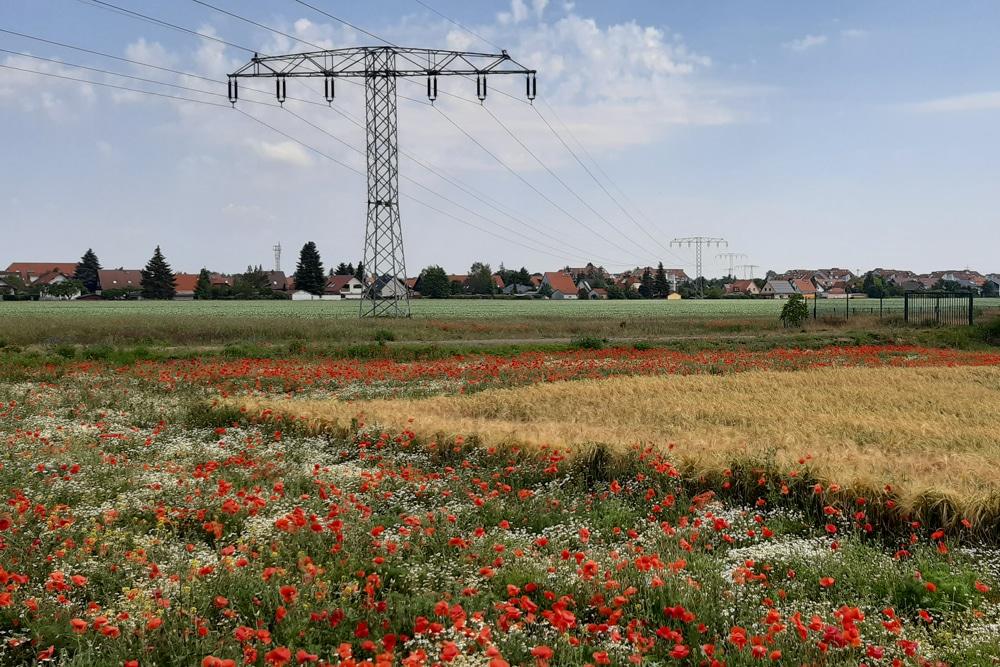 Feld bei Rückmarsdorf. Foto: Detlev Ducksch