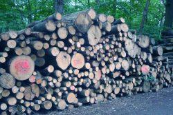Nachwachsender Rohstoff - Holz. Foto: Gernot Borriss