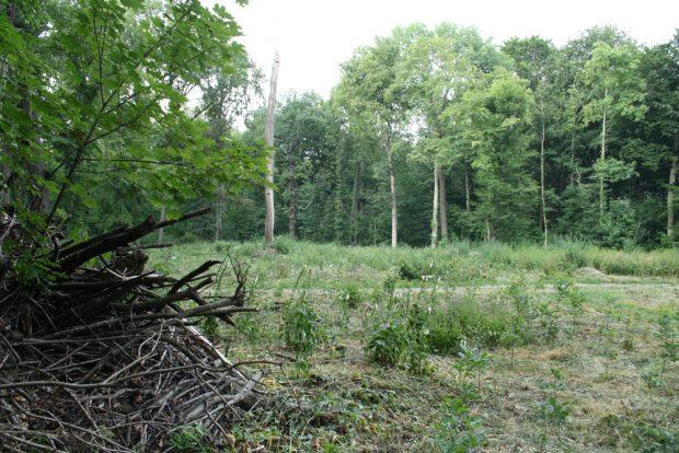 Freigeschlagene Fläche im Waldgebiet Nonne. Foto: Ralf Julke