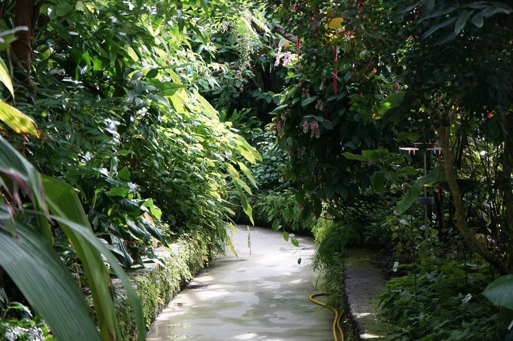 Blick ins Schmetterlingshaus © Förderkreis des Botanischen Gartens