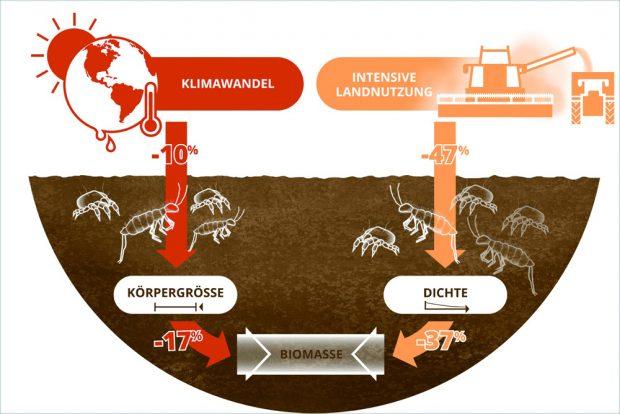 Klimawandel und Landnutzung reduzieren die Biomasse der Bodentiere über unterschiedliche Pfade: Das veränderte Klima reduziert die Körpergröße und die Bewirtschaftung die Häufigkeit. Grafik: Lisa Vogel / UFZ