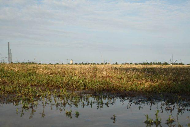 Auch unsere Landwirtschaft muss wieder naturnah werden und Artenvielfalt ermöglichen. Foto: Ralf Julke