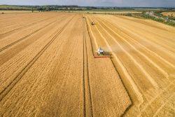 Wissenschaftler gehen davon aus, dass die Landwirtschaft, so wie sie derzeit praktiziert wird, für die Gefährdung von rund 62 Prozent aller bedrohten Arten weltweit verantwortlich ist. Foto: André Künzelmann / UFZ
