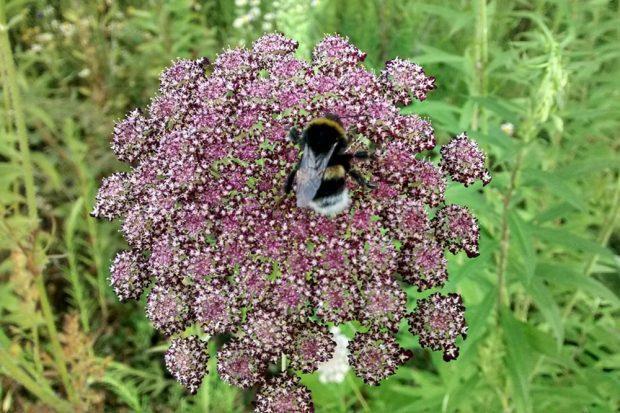 Die Brache ist derzeit noch ein Insektenparadies. Foto: Alexander John