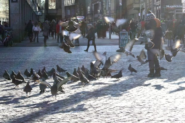 Tauben auf dem Leipziger Markt. Foto: Ralf Julke