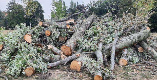 Holzstapel am Wegrand im Mariannenpark. Foto: Jan Kretzschmar