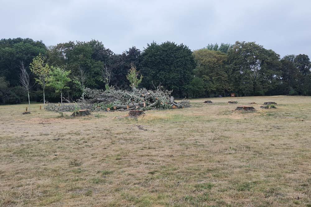 Wiese mit Baumstümpfen im Mariannenpark. Foto: Jan Kretzschmar