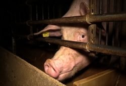 Quelle: Animal Rights Watch