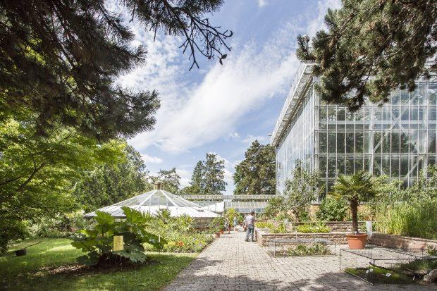 Gewächshäuser im Botanischen Garten der Universität Halle. Foto: Uni Halle / Matthias Ritzmann
