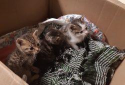 Katzenbabys im Karton. Foto: Bundespolizei Leipzig