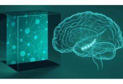 Das Gehirn erwirbt Wissen, indem es die Kartierung von verhaltensrelevanter Information unterstützt. Grafik: MPI CBS